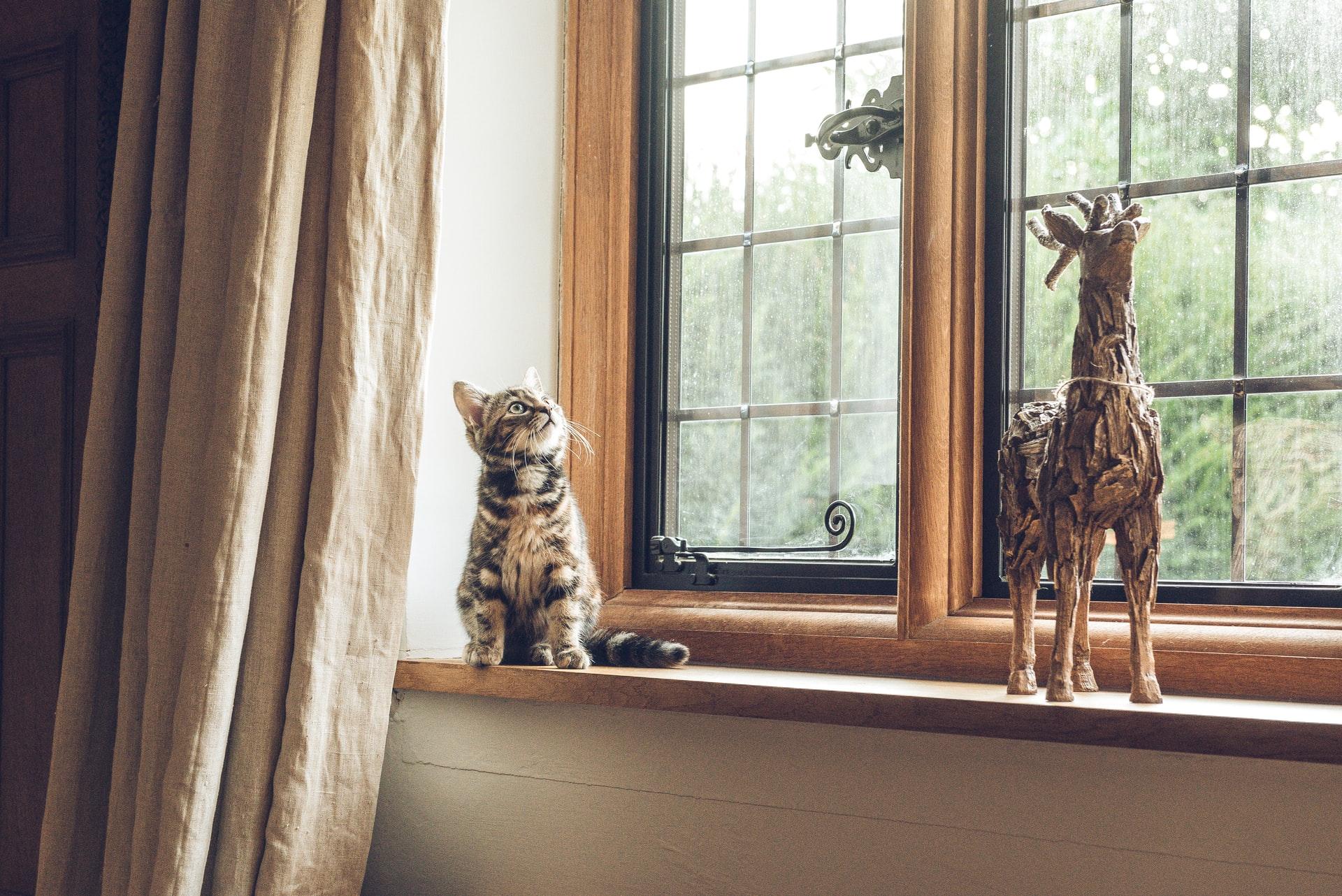 Cat in home window