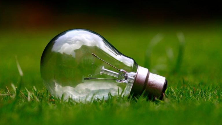 Lightbulb On Grass