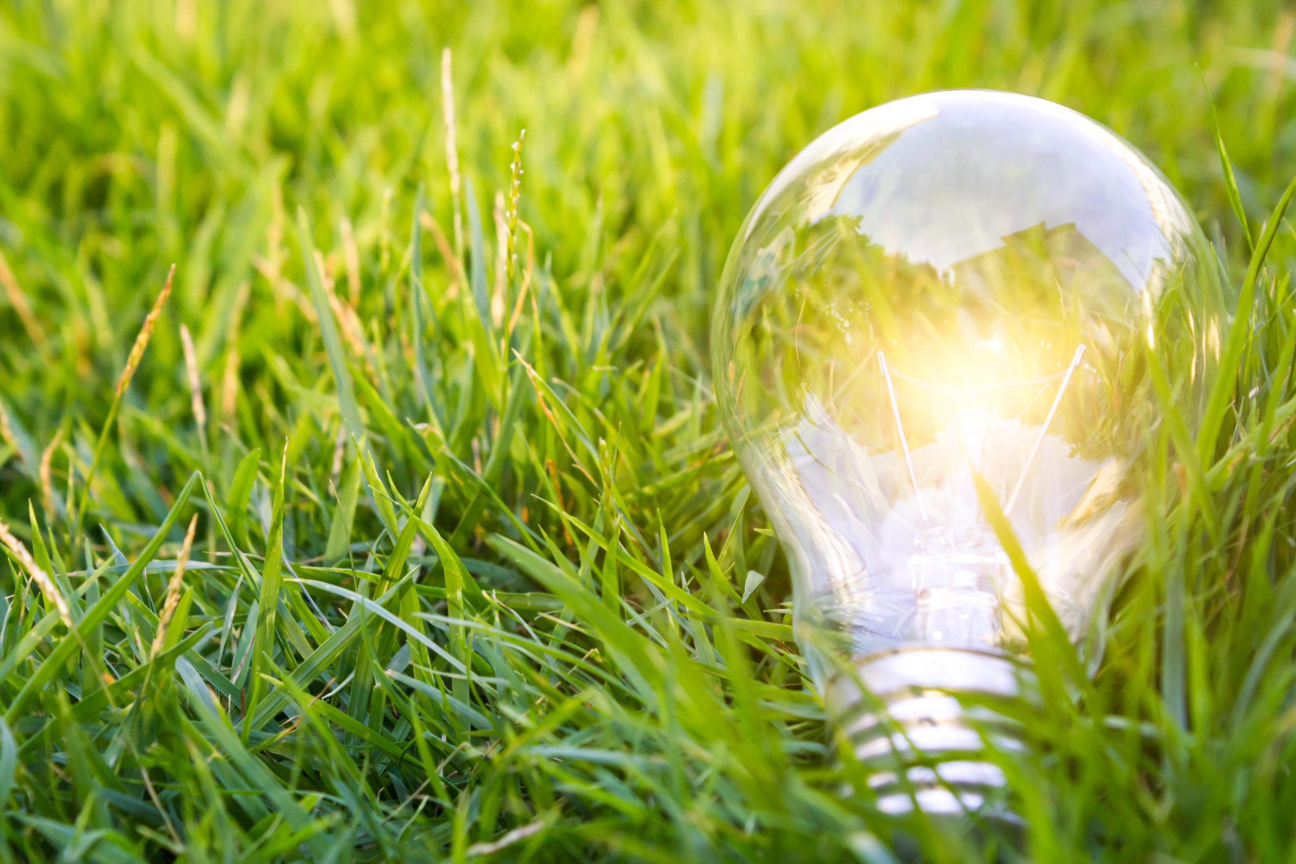 Lit Lightbulb on Grass